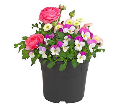 Frühjahrsmix, rosa