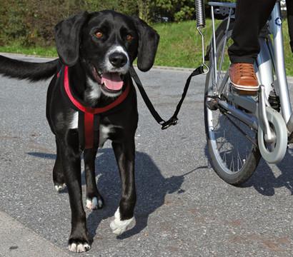 Friends on Tour Biker-Set de Luxe Fahrradhalterung für Hunde