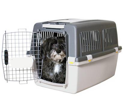 friends on tour transportbox gulliver gr 4 dehner garten center. Black Bedroom Furniture Sets. Home Design Ideas
