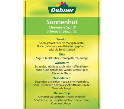 Garten-Scheinsonnenhut \'Cheyenne Spirit\' : Dehner Garten Center