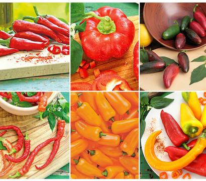 Gemüsepaket Paprika-Peperoni-Mix, 6 Pflanzen