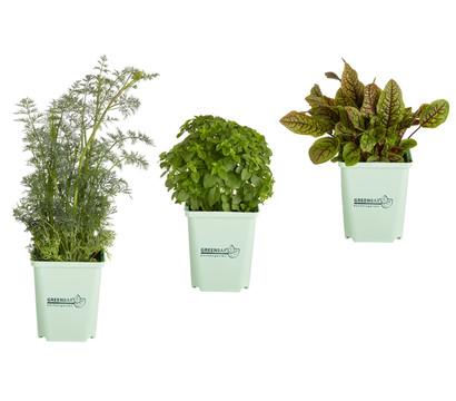 GREENBAR® Salatkräuter, 3er Pack