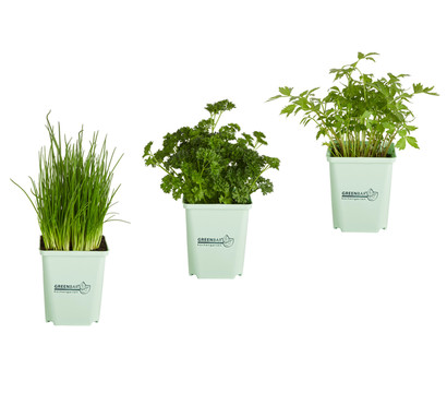 GREENBAR® Suppenkräuter, 3er Pack