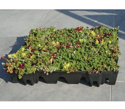 GrünDach - Platte, 10 Stück, ca. 2,2 m²