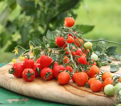 Herztomate 'Tomatoberry'