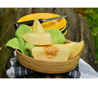 Honigmelone, veredelt