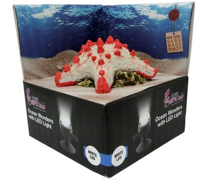 hydor Ocean Wonders Seestern + LED weiß, Aquariumdeko