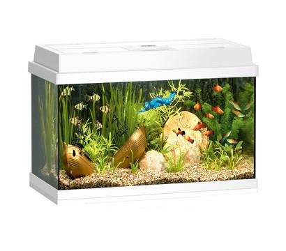 Juwel Rekord 600 Aquarium Set