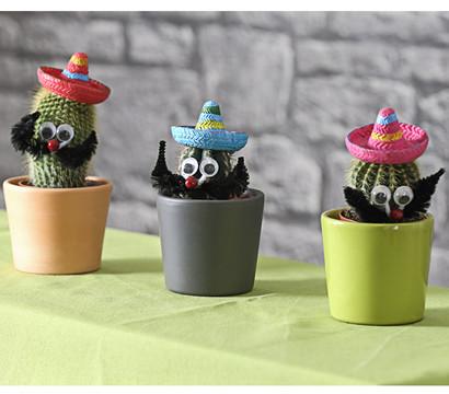 kaktus mit sombrero dehner garten center. Black Bedroom Furniture Sets. Home Design Ideas