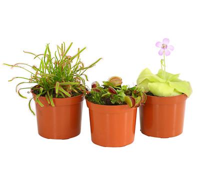 Karnivoren - Pflanzen-Set