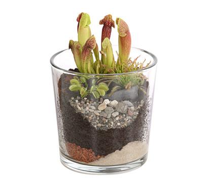 Karnivoren, im Glasgefäß