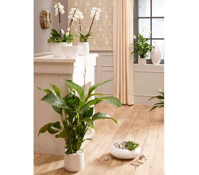 keramik vase wei 18 cm dehner garten center. Black Bedroom Furniture Sets. Home Design Ideas