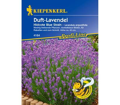 Kiepenkerl Saatgut Duft-Lavendel 'Hidcote Blue Strain'