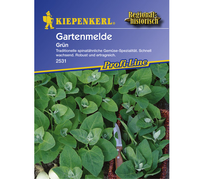 Kiepenkerl Saatgut Gartenmelde 'Grün'