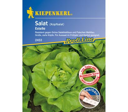 Kiepenkerl Saatgut Kopfsalat