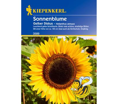 Kiepenkerl Saatgut Sonnenblume 'Gelber Diskus'