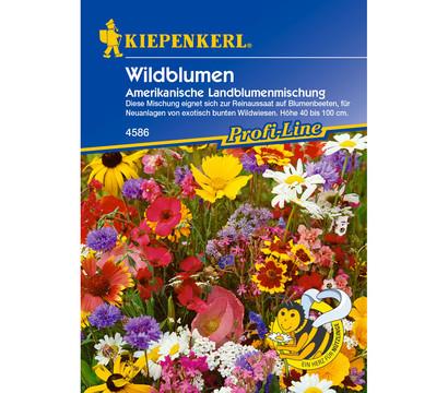 Kiepenkerl Saatgut Wildblumen Amerikanische Landblumenmischung