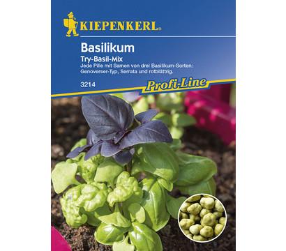 Kiepenkerl Samen Basilikum 'Try-Basil-Mix'