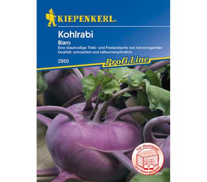 Kiepenkerl Samen Kohlrabi 'Blaro'
