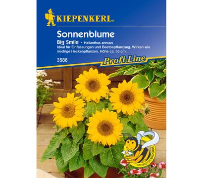 Kiepenkerl Samen Sonnenblume 'Big Smile'