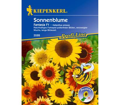 Kiepenkerl Samen Sonnenblume 'Fantasia'
