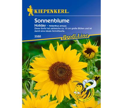 Kiepenkerl Samen Sonnenblume 'Holiday'