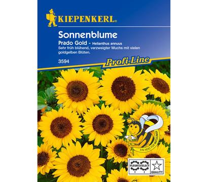 Kiepenkerl Samen Sonnenblume 'Prado Gold'