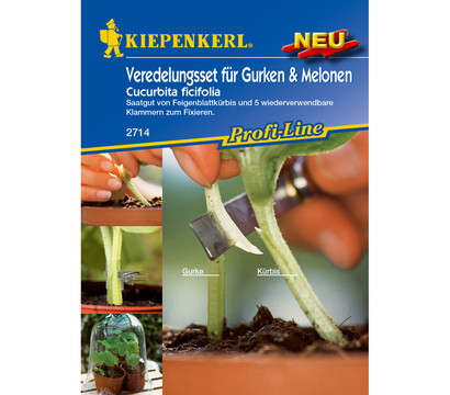 Kiepenkerl Samen Veredelungsset für Gurken & Melonen 'Cucurbita ficifolia'