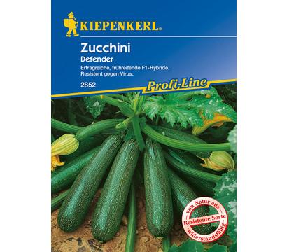 Kiepenkerl Samen Zucchini 'Defender'