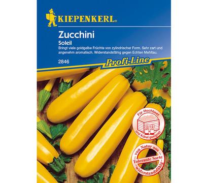kiepenkerl samen zucchini 39 soleil 39 dehner garten center. Black Bedroom Furniture Sets. Home Design Ideas