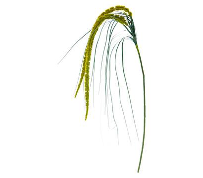 Kunstpflanze Amaranthus, 70 cm