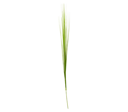 Kunstpflanze Isolepsis, hellgrün, 70 cm