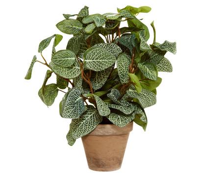 Kunstpflanze Pilea, 35 cm