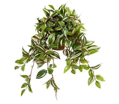Kunstpflanze Tradescantia, Höhe 45 cm