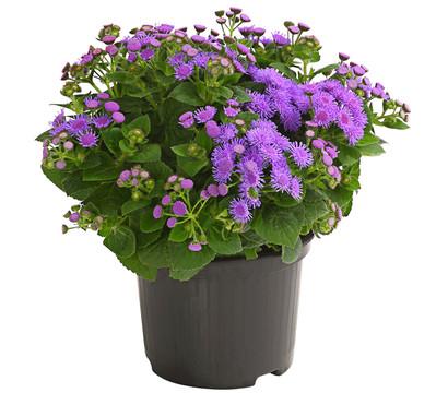 Рассада однолетних цветов от производителя низкие цены