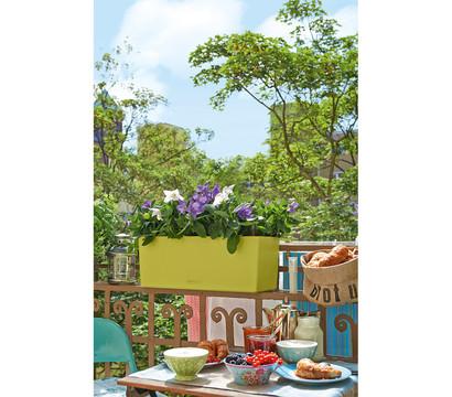 lechuza balconera color 50 pistaziengr n dehner garten. Black Bedroom Furniture Sets. Home Design Ideas