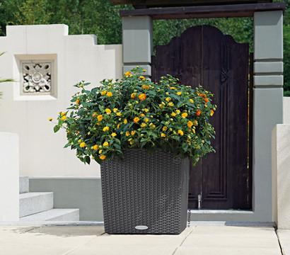 LECHUZA® Blumenkübel Cube Cottage, eckig : Dehner Garten Center