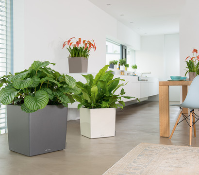 lechuza cube all in one set eckig 50 x 50 x 50 cm. Black Bedroom Furniture Sets. Home Design Ideas