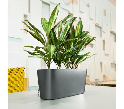 lechuza fensterbank komplettset delta 18 x 15 x 40 cm dehner garten center. Black Bedroom Furniture Sets. Home Design Ideas