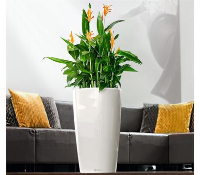 lechuza rondo all in one set 40 cm dehner garten center. Black Bedroom Furniture Sets. Home Design Ideas