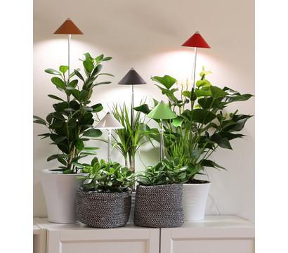 led pflanzenlampe dehner garten center. Black Bedroom Furniture Sets. Home Design Ideas