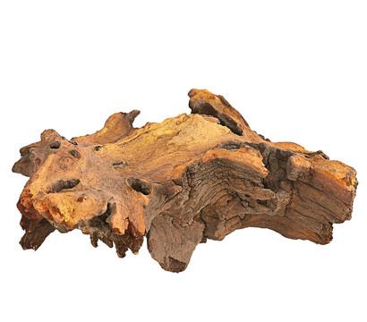 Mopani-Wurzel
