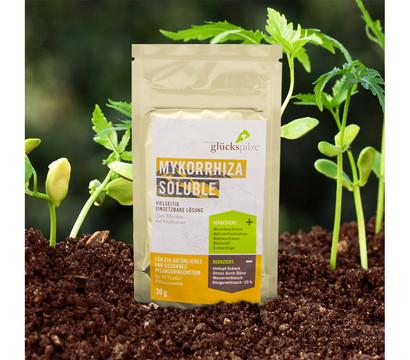Mykorrhiza Soluble, 30 g