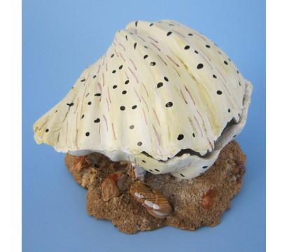 Orbit Muschel, Aquariumdeko