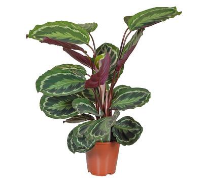 Комнатные растения фото каталог энциклопедия комнатных