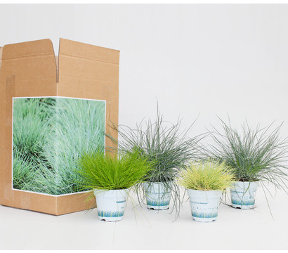 Pflanzenpaket Garten-Gräser, 4er Set
