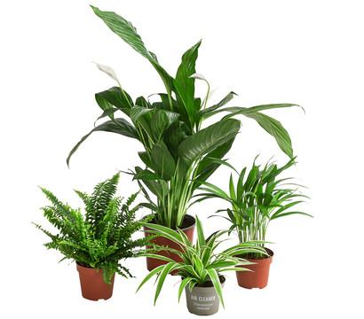 Pflanzenpaket 'Lufterfrischer'