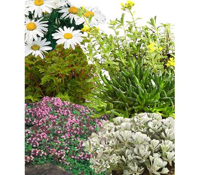 Pflanzenpaket Steingartenstauden, 12er-Set