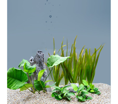 Planet Plants 60er Set Bund & Topf, Aquarium Pflanzen