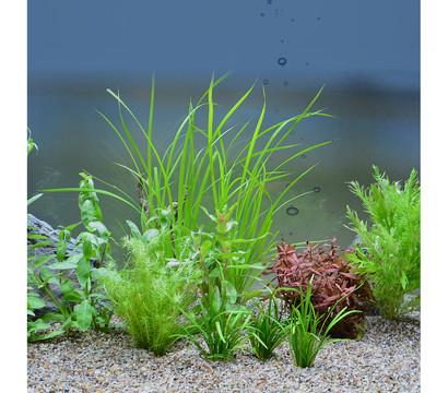 planet plants 60er set bund aquarium pflanzen dehner garten center. Black Bedroom Furniture Sets. Home Design Ideas